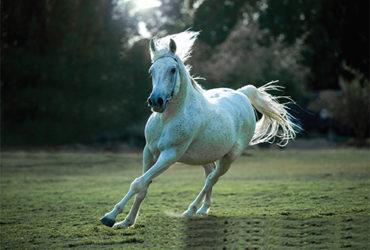 horse-4